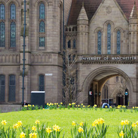 Spring outside the John Owens Building with daffodils in the foreground